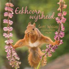 Eekhoorn-wijsheid