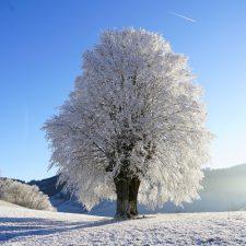 Shodo Winter School